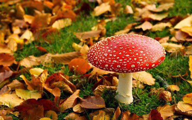 Herfst achtergrond met paddenstoel