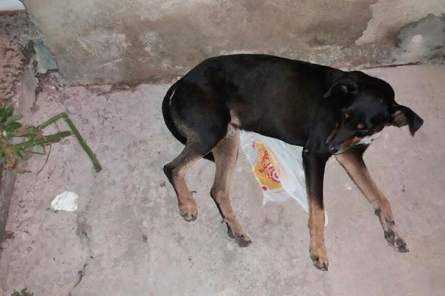 Polícia flagra crime ambiental em N. S. do Socorro, cão foi espancado