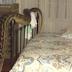 Vídeo: Mulher acorda durante a noite e encontra cobra de 5 metros em sua cama
