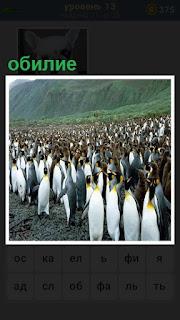 на берегу обилие пингвинов, стоят в большом количестве