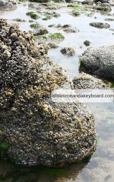 Barnacle covered rock at Cannon Beach.