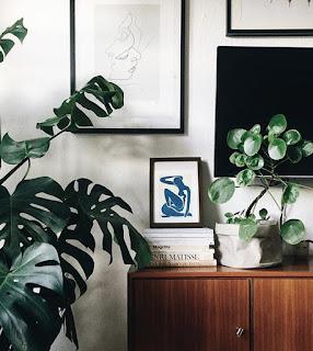 Najmodniejsza roślina