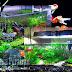 7 Langkah Mudah Instalasi dan Penataan Akuarium Ikan Di Dalam Rumah