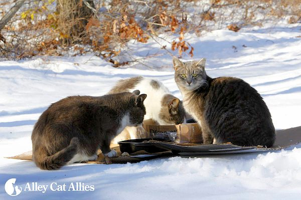 feral cats winter care
