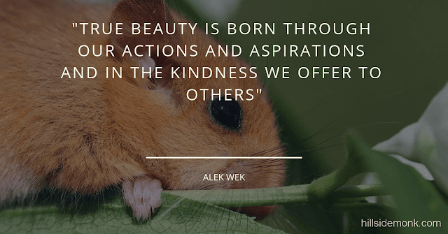 10 Short Kindness Quotes To Make You Better Person-1  True beauty is born through our actions and aspirations and in the kindness, we offer to others - Alek wek