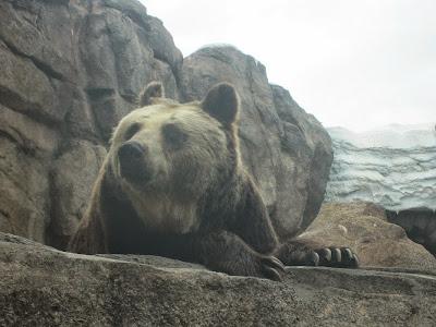 神戸市立王子動物園 エゾヒグマ