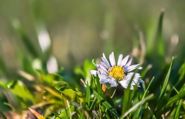 wiosna,stokrotka,antymiasto,blog,wies,