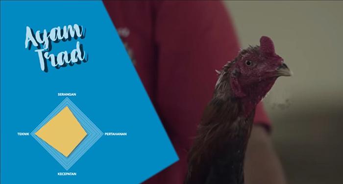 karakteristik ayam trad