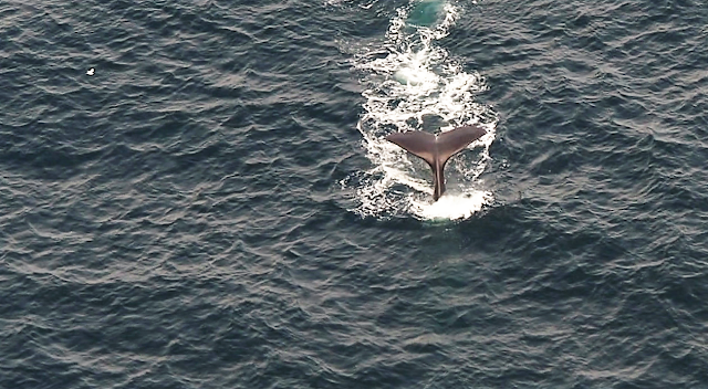 Whalwatching flight, Kaikoura