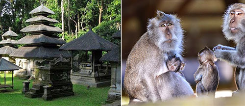 Alas Kedaton Monkey Forest and Alas Kedaton Temple Bali, Indonesia - Tabanan Bali Places of Interest