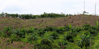 Land cleared for oil palm plantation in East Kalimantan, Indonesia. (Image Credit: Mokhamad Edliadi/CIFOR) Click to Enlarge.