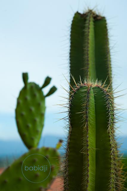 cactus très piquants en gros plan sur une terrasse