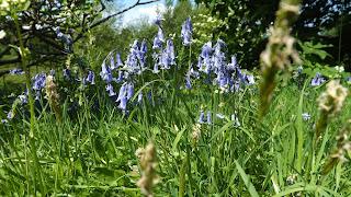 Vadvirágok Skóciában