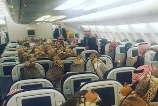Foto no interior de um avião wide-body (dois corredores) da Qatar Airways com todas as luzes acesas. Na parte central de assentos, dezenas de falcões vendados com capuzes estão acomodados sobre as mesas abertas de cada poltrona individual. Há passageiros em poltronas próximas. Ao longo dos corredores, dois comissários de bordo estão posicionados próximos a uma parede divisória para a demonstração de emergência.