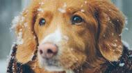 Cute Dog Winter Mobile Wallpaper