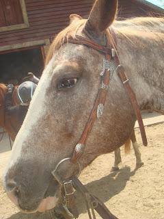 El Bronco, appaloosa, Unkari, Riitta Reissaa, Horsexplore