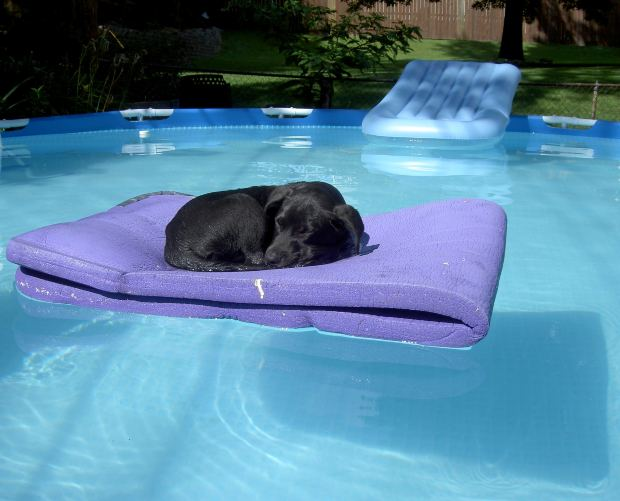 5 Not When The Pool Cover Is On I Don T Let Dogs Inside Fence Read That If A Dog Broke Through