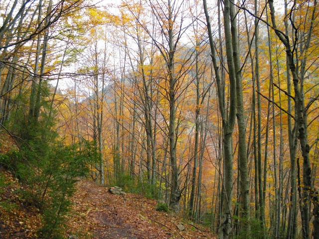 fagedes, colors de tardor, els boscos més bonics de Catalunya a la tardor, paisatges de tardor, Camí dels Bons Homes
