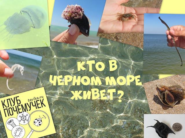 Детям об обитателях Черного моря