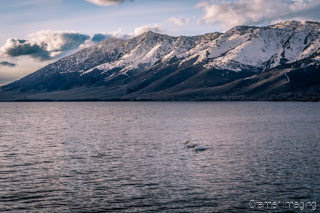 Cramer Imaging's landscape and nature photograph of Henry's Lake, Island Park,  Idaho with snow-capped mountains and white pelicans swimming