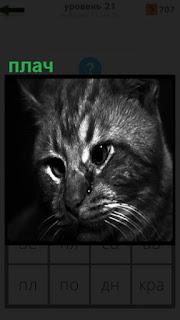1100 слов грустная кошка роняет слезы из глаз 21 уровень