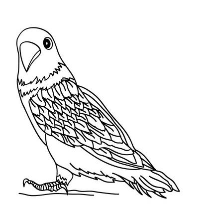 Mewarnai Gambar Burung Merpati