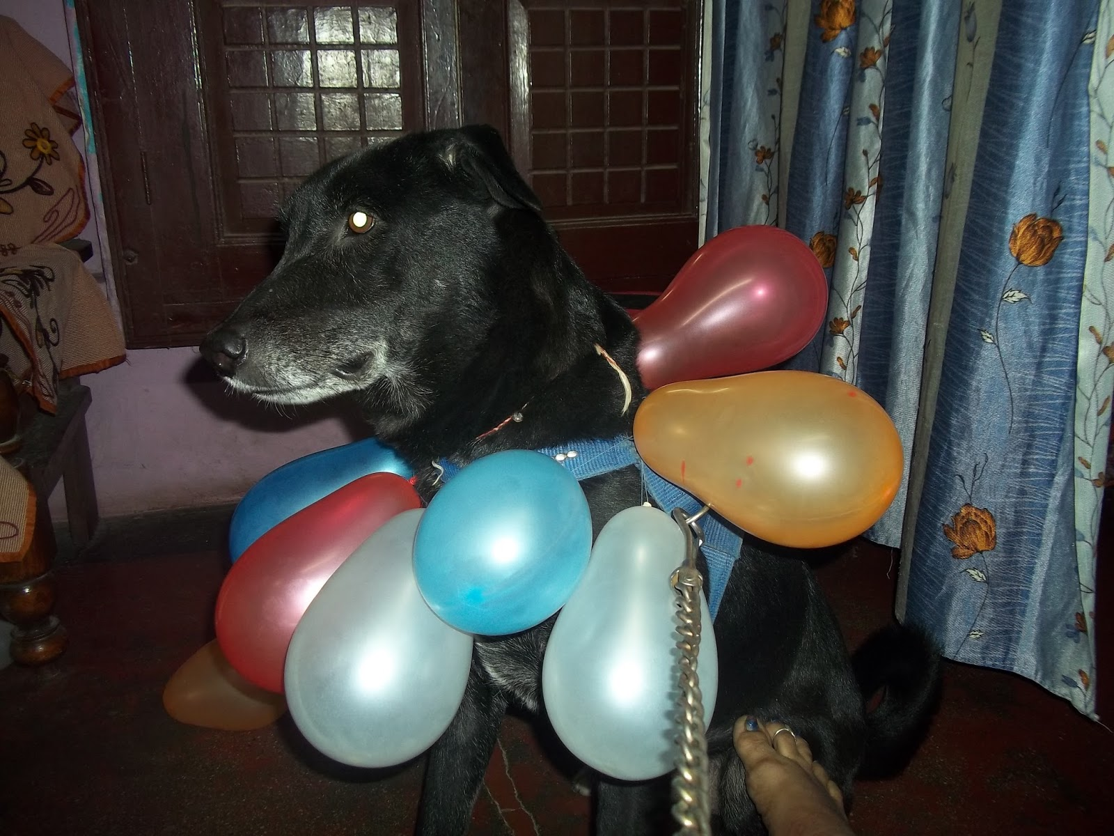 Image result for Purchase invitations dog