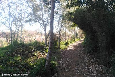 Camí riu Gaià