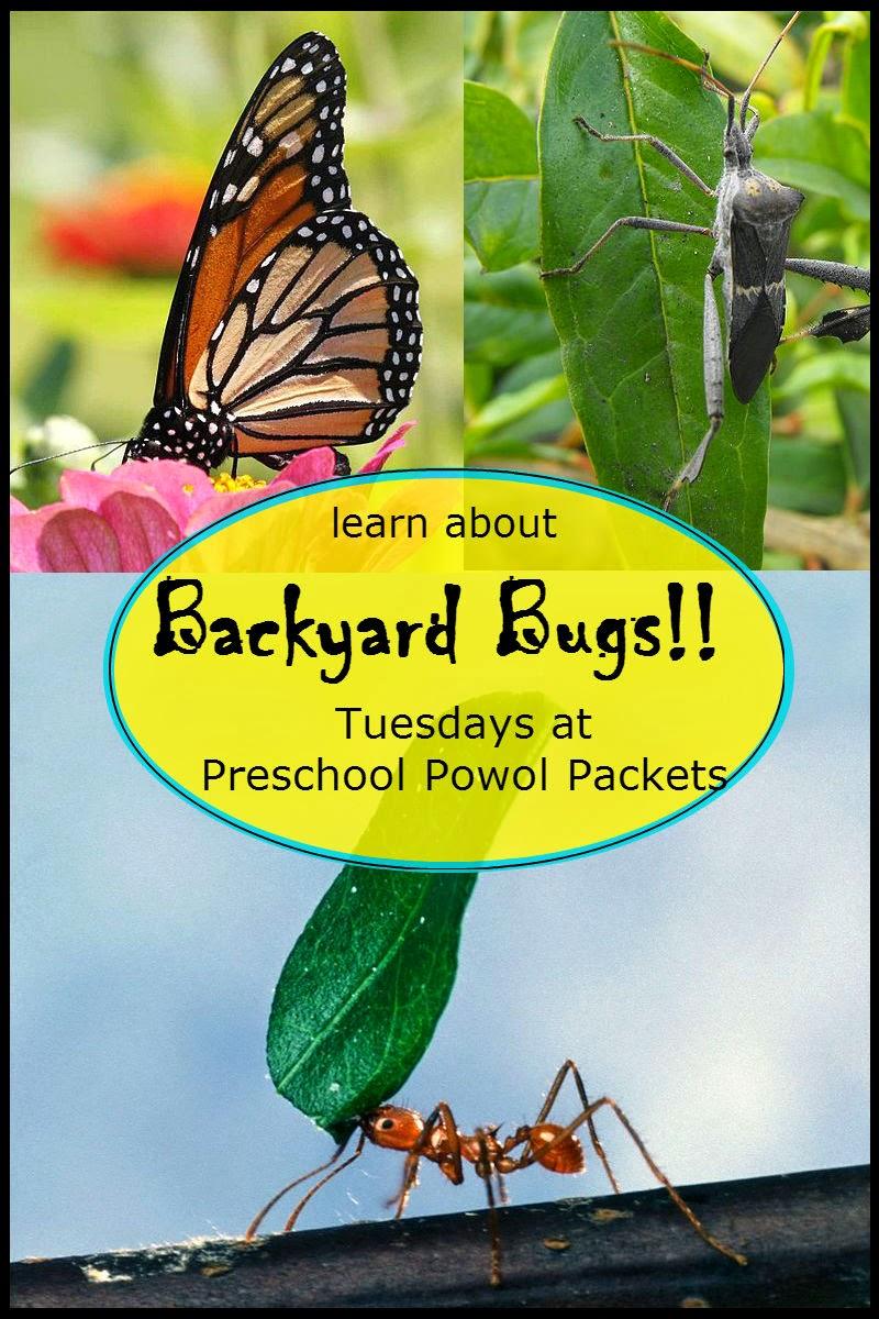backyard bugs roly poly or potato bug or pill bug or wood lice