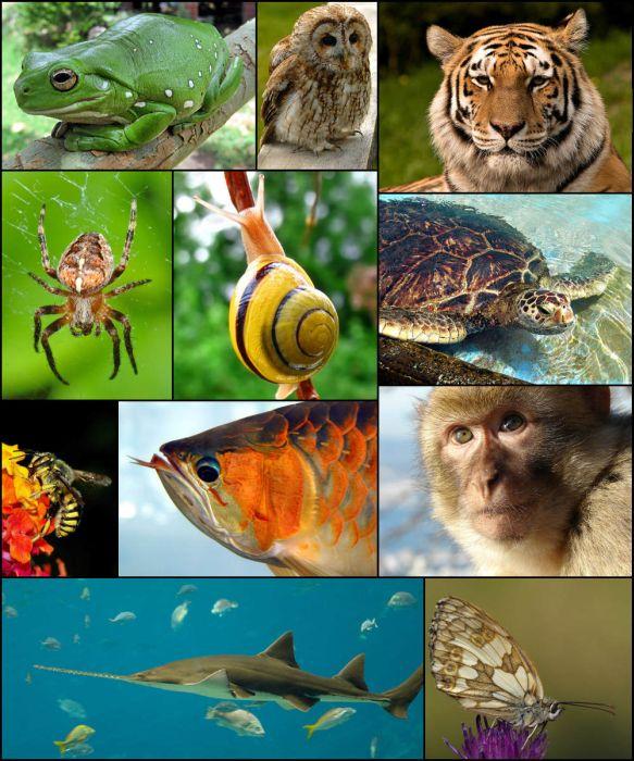 91 Gambar Makhluk Hidup Hewan Gratis
