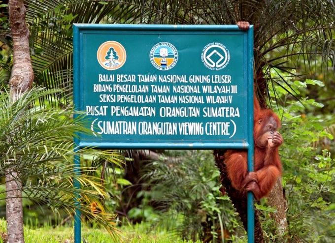 Taman Nasional Gunung Leuser salah satu 7 Taman Wisata Terbaik Di Indonesia Yang Bisa Anda Kunjungi Bersama Keluarga.