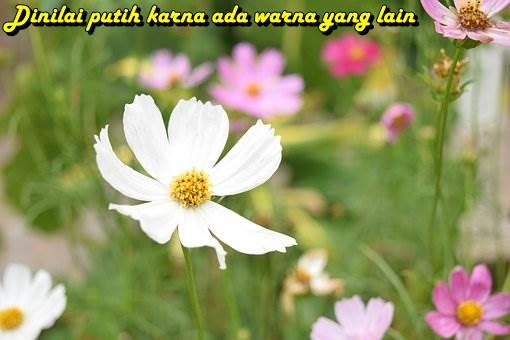 kiat jitu Allah Tidak TERIMA Ketika Orang Kafir Mengolok-olok Orang Islam yang Masuk Neraka www.kiatjitu.com