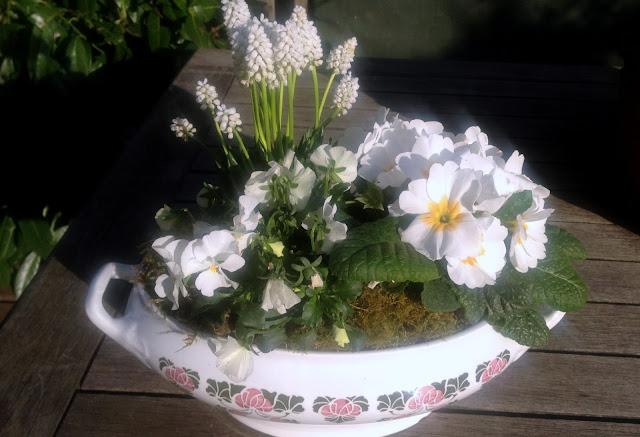 Suppenterrine bepflanzt mit Frühlingsblühern