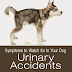 Symptoms to Watch for in Your Dog: Changes in Urination/Urinary Accidents
