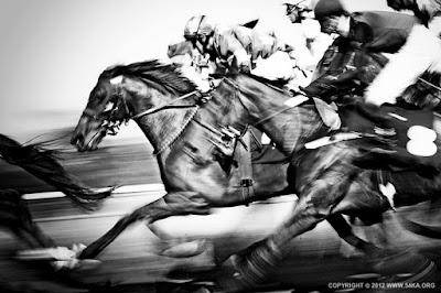 horse racing tips, horse racing news, winning racing tips