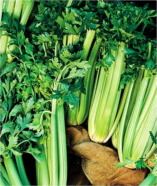 The Garden Oracle's Herb Seed & Plant Pages:  Browse our Large & Diverse Selection of Culinary & Medicinal Herb Seeds, Plants, Starts, Roots and Bulbs for Your Herb Gardens and Containers through the Categorized Links Below.  Choose from Culinary Favorites, Flowering Herbs, Medicinal Specialties, Treasured Heirlooms, Standard Varieties and Certified Organic Types from Multiple Suppliers.  All the Herbs you Need for Your Kitchen Garden, Culinary Herb Patch, Raised Herb Beds, Medicinal Herb Garden, Flowering Herb Borders and Container Herb Gardens!