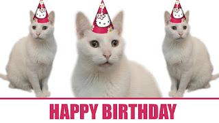 happy birthday by cat