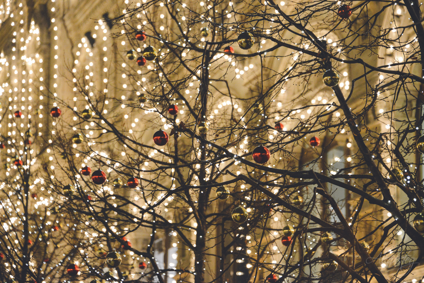 Trees decorated with Christmas balls