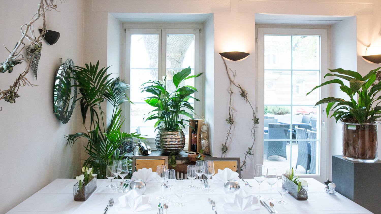 Schaffhausen in der beckenburg w chst jetzt ein regenwald for Idee und garten oliver krull