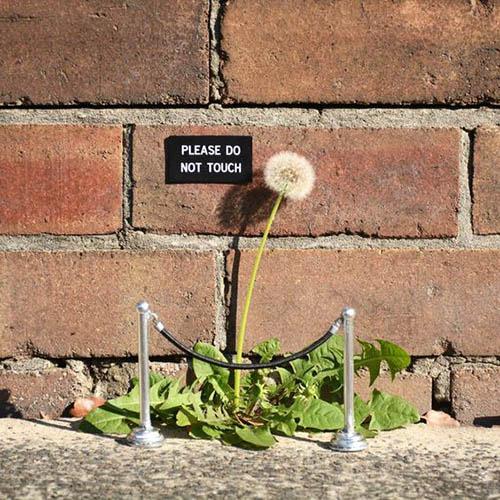 street art fleur protégée par un cordon de sécurité