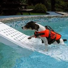 piscinas e os animais