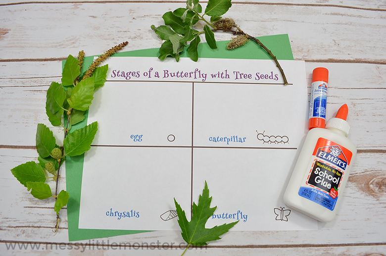 Life cycle of a butterfly activity for kids with free printable
