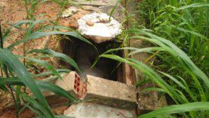 No Piauí, cavalo é encontrado morto dentro de cova em cemitério; veja fotos