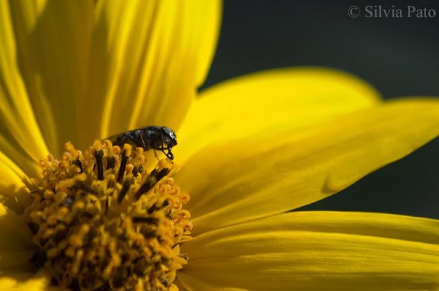 Insecto en flor