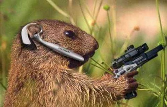 Cute funny animalz funny animals with guns - Pictures of funny animals with guns ...