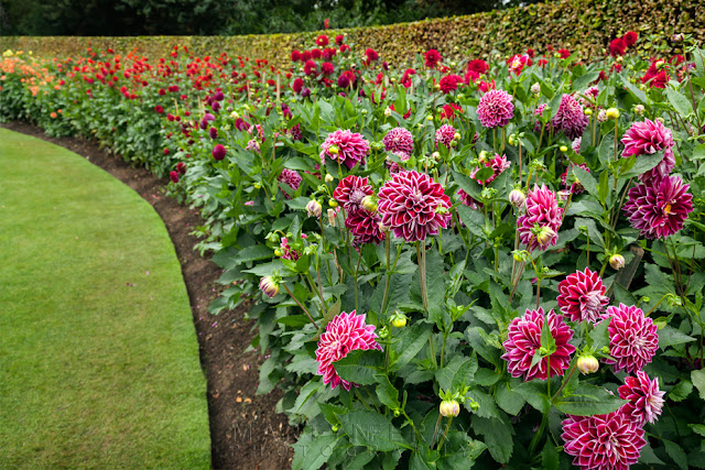 Beautiful flowers line the grounds of Anglesey Abbey by Martyn Ferry Photography