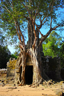 Le Chmaeau Bleu - Site d'Angkor Siem Reap Cambodge
