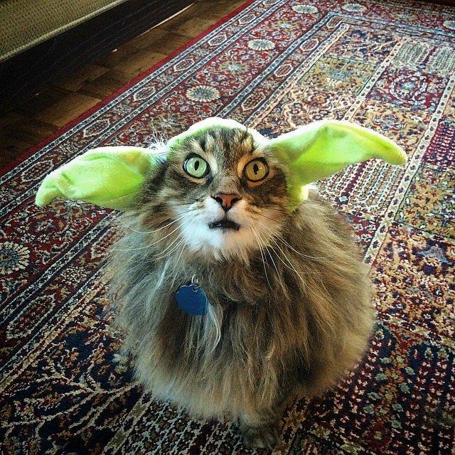 gato disfraz yoda