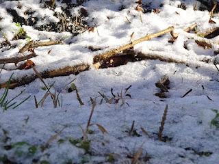 朝日に照らされる3月の淡雪
