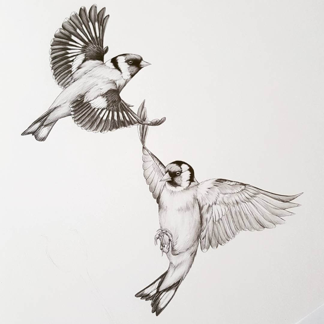 12-Goldfinch-in-flight-Kerry-Jane-Detailed-Black-and-White-Wildlife-Drawings-www-designstack-co